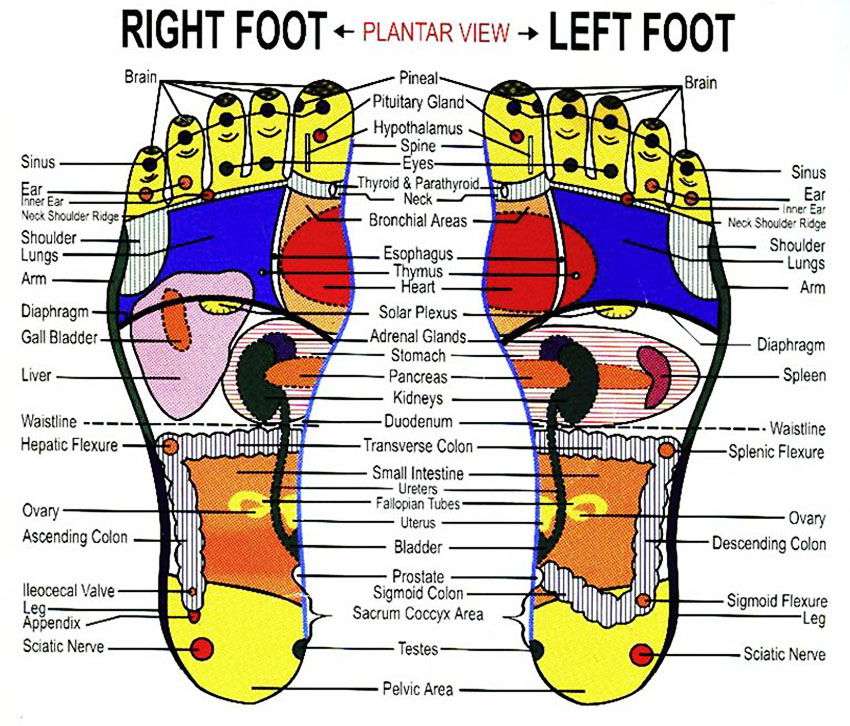 reflexology foot chart lifeologia