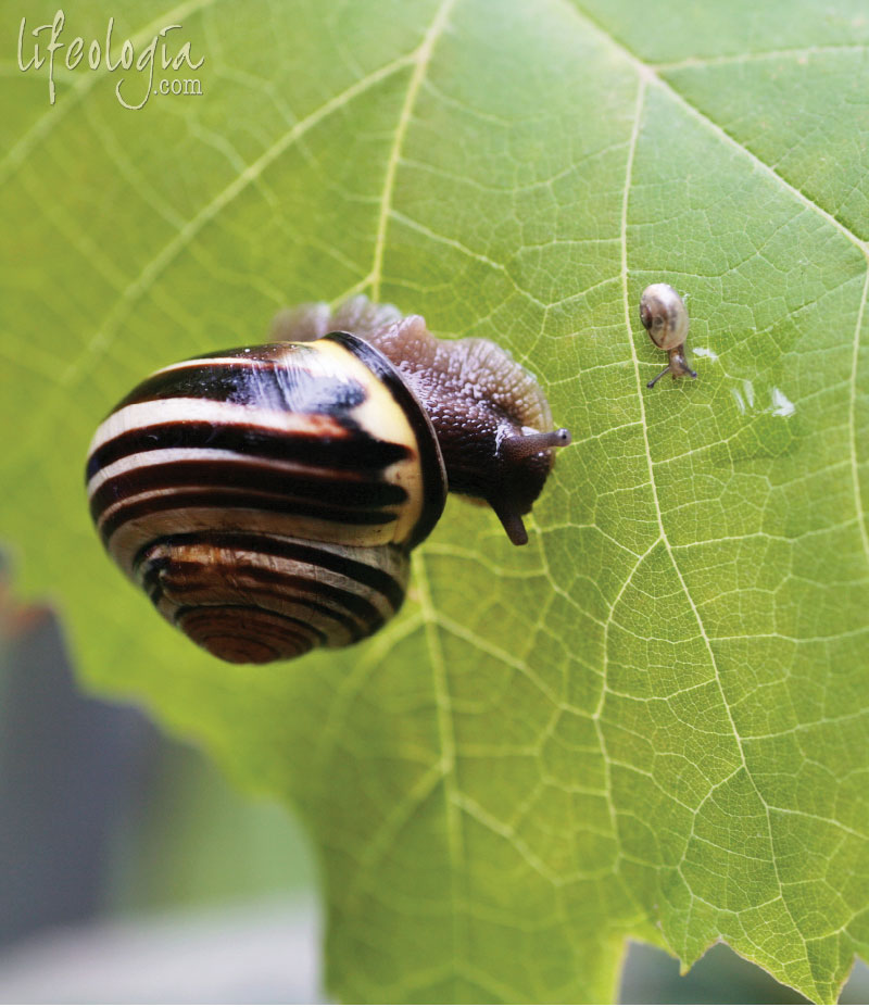 this-moment macro-snail-photography